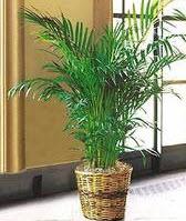 plantes pour éviter la pollution des habitats